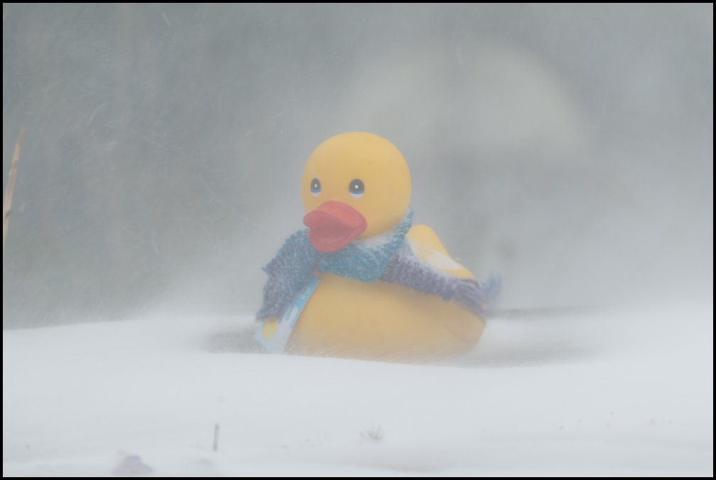duck & beast from the east-0976.jpg
