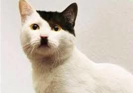 Ukip Cat.jpg